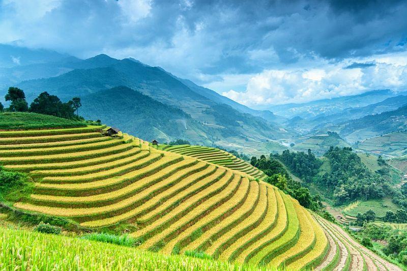 Banaue Rice Terrace Luzon Philippines