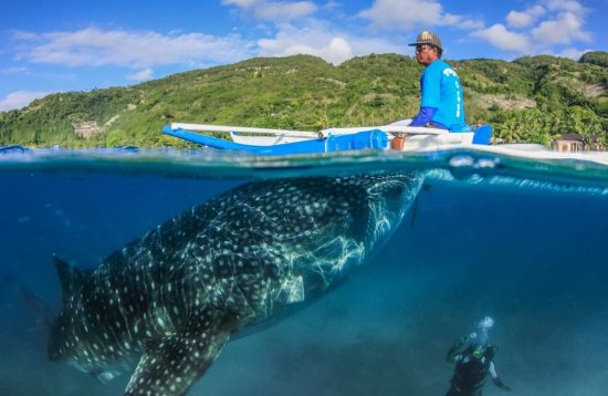 Fisherman boat near a whale shark in Cebu
