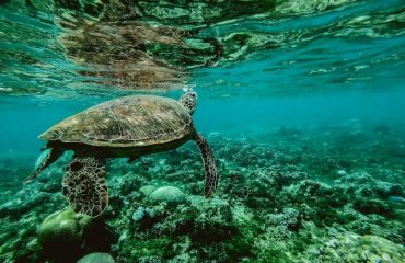 Day trip to Apo Island from Dumaguete, Philippines