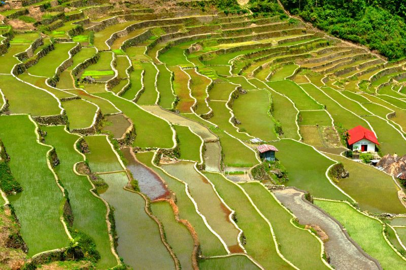Scenic view of Banaue's rice Terraces