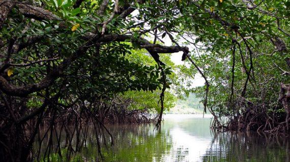 Malbato Mangrove Forest Park, Coron