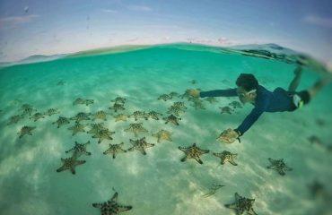 Starfish Balabac